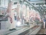 Линия по забою  МРС-  мелкого рогатого скота - овец и ягнят